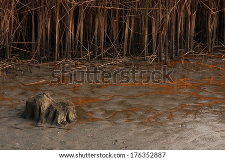 Environmental pollution in a dried lake - stock photo