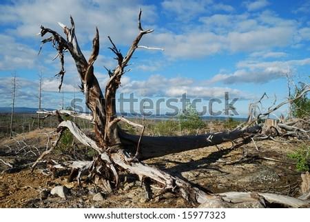 Environmental problems - stock photo