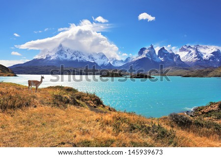 Epic beauty of the landscape - the National Park Torres del Paine in southern Chile. Graceful silhouette guanaco on the lake Pehoe - stock photo