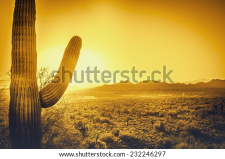 Epic desert sunset over valley of the Sun, Phoenix, Scottsdale, Arizona with Saguaro cactus in foreground.  Plenty of space for copy, banner text.. - stock photo