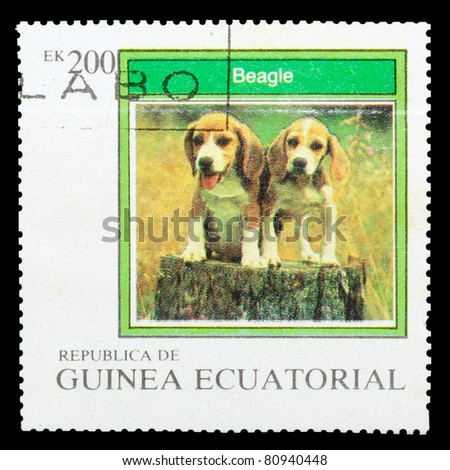 EQUATORIAL GUINEA - CIRCA 1977: A stamp printed by EQUATORIAL GUINEA shows a dog Beagle, series, circa 1977 - stock photo