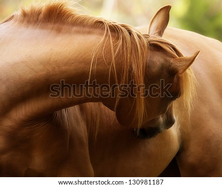 Equine Curves - stock photo