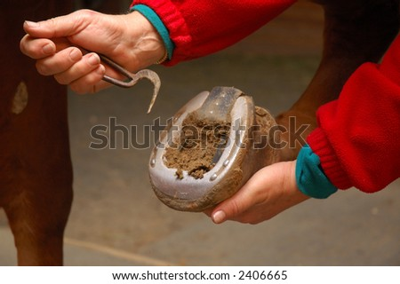 Equine health-care, cleaning the frog - Horse Shoe Cleaning - stock photo