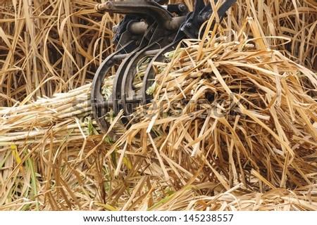 Equipment machine harvest sugarcane in farm. - stock photo
