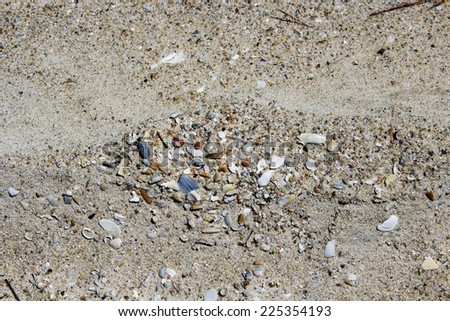 Eroded shells  washed up onto the sand mixed with mineral sands at Hutt's Beach near Bunbury Western Australia after stormy weather  on a fine  afternoon in early spring. - stock photo