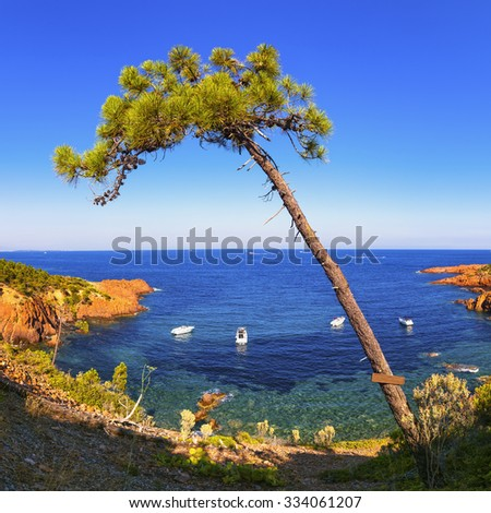 Esterel mediterranean tree, red rocks coast, beach and sea. French Riviera in Cote d Azur near Cannes, Provence, France, Europe. - stock photo