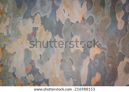 Eucalyptus tree bark texture - stock photo
