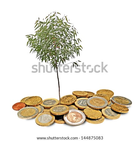 Eucalyptus tree growing from pile of coins - stock photo