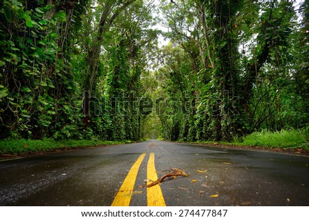 Eucalyptus tree tunnel near Koloa Town on Kauai, Hawaii - stock photo