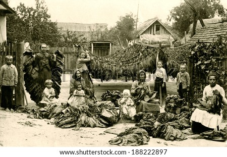 EUROPE - GERMANY - CIRCA 1890 A vintage photo of a group of German woman during their occupation of cleaning and drying tobacco leaves. There are tobacco leaves hanging from lines. CIRCA 1890 - stock photo