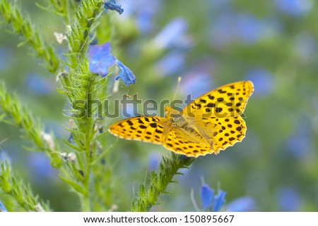 European butterfly - stock photo