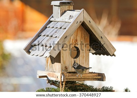European Crested Tit bird (Lophophanes cristatus) on the wooden bird feeder with hemp seeds in the winter in Austria - stock photo