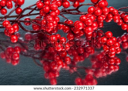 european holly on silver background - stock photo