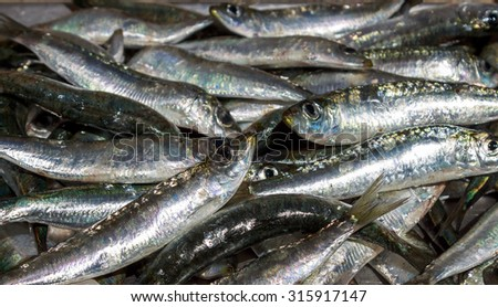 European pilchard or sardines - stock photo