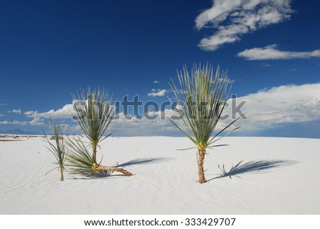 Even in the harshest environments life finds a way to survive. White Sands National Monument in New Mexico. - stock photo
