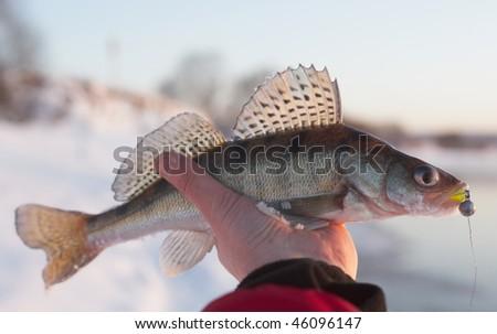Evening catch - stock photo