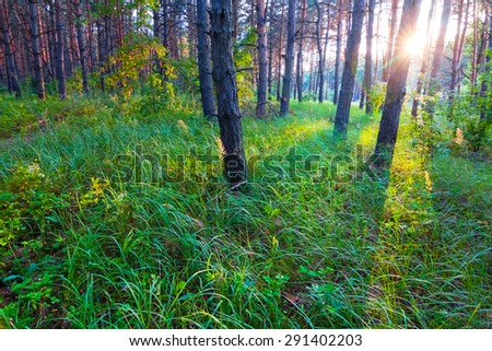 evening forest scene - stock photo