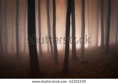 evening in an elegant forest - stock photo