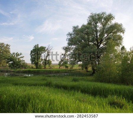 Evening landscape, trees, pond and grass - stock photo