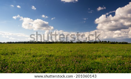 Evening landscape with clover fields and blue sky - stock photo