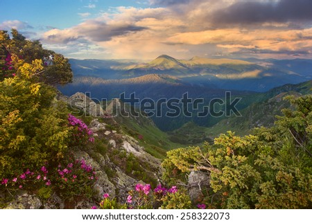 evening mountains and rhododendron, mountain range on the horizon and clouds yellow sun - stock photo
