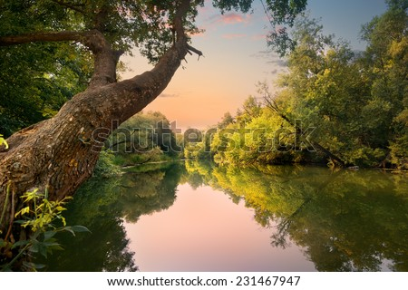 Evening on the river in the forest - stock photo