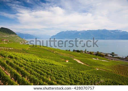 Evening on vineyards of the Lavaux region over lake Leman (lake of Geneva), Switzerland - stock photo