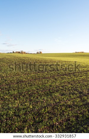 Evening sunlight on new green wheat. - stock photo
