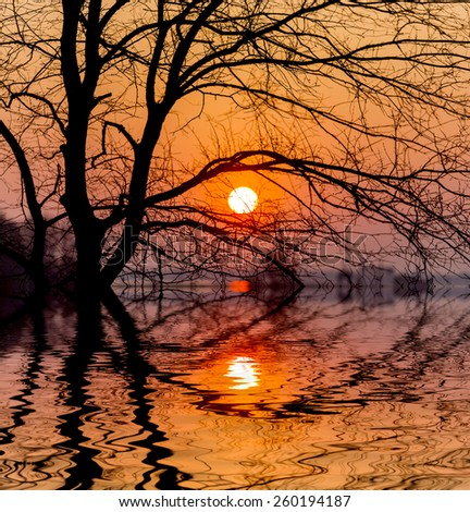 Evening sunset sun and tree with water reflection  - stock photo