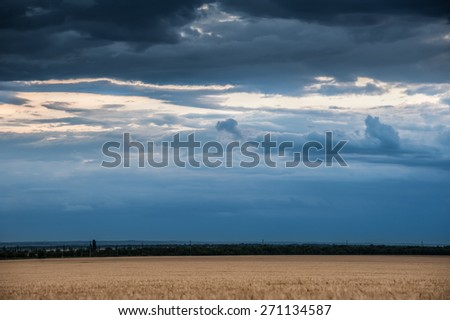 evening wheat field and blue sky summer landscape - stock photo