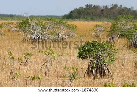 Everglades landscape, Everglades National Park, Florida - stock photo