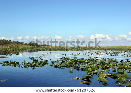Everglades wetland in Florida - stock photo
