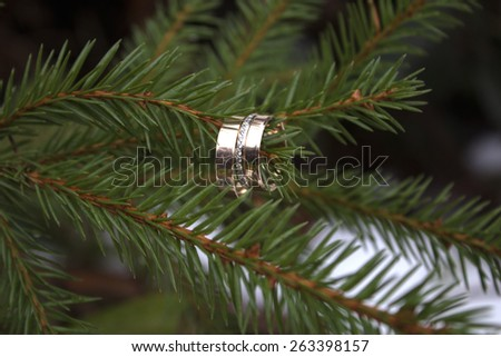 evergreen spruce on white with rings - stock photo