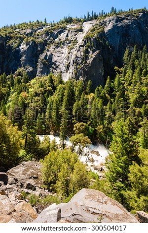 Evergreen Trees at Yosemite National Park - stock photo