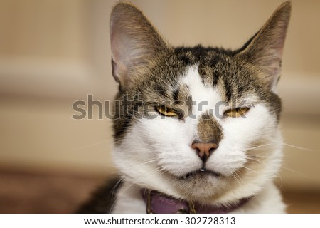 Evil looking thoughtful cat's gaze - stock photo