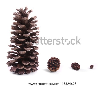 Evolution of different sized pine cones. - stock photo