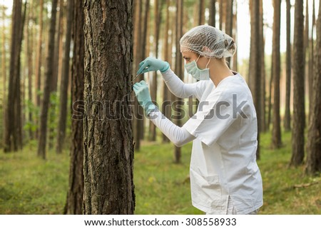 Examine the forest - stock photo