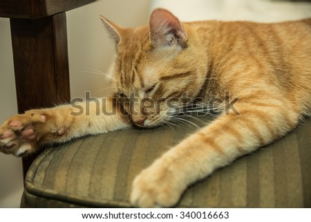 Exhausted cat sleeping on chair - orange Tabby kitten is very tired and taking a nap - stock photo