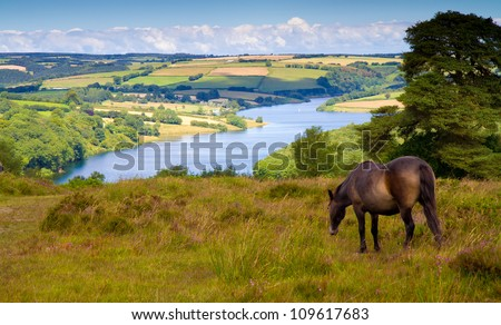 Exmoor pony and Wimbleball Lake Exmoor National Park Somerset.  Known for its activity centre and is popular for walking, camping, birdwatching, angling, sailing, windsurfing, canoeing etc - stock photo