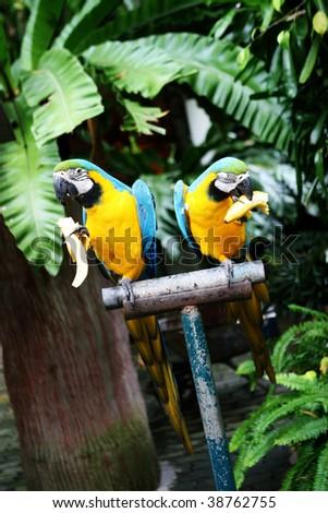Exotic birds in captivity at the zoo. - stock photo