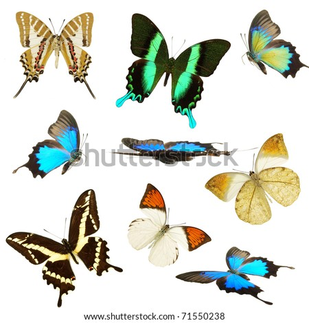 Exotic Butterflies collection - stock photo