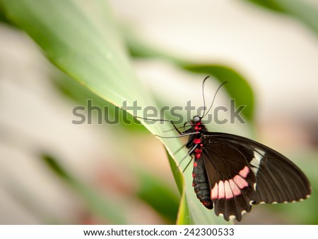 exotic butterfly with green background on the leaf - stock photo