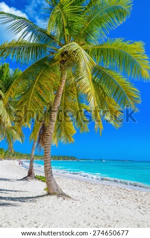 Exotic Caribbean beach with white sand and beautiful palm trees - stock photo
