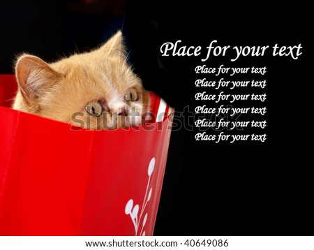 Exotic cat starring from bag - stock photo