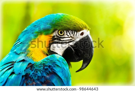 Exotic colorful African macaw parrot, beautiful close up on bird face over natural green background, bird watching safari, South Africa wildlife - stock photo