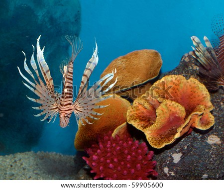 Exotic fish with Coral reef background - stock photo