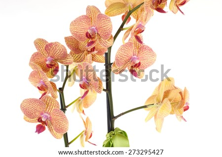exotic flower - stock photo