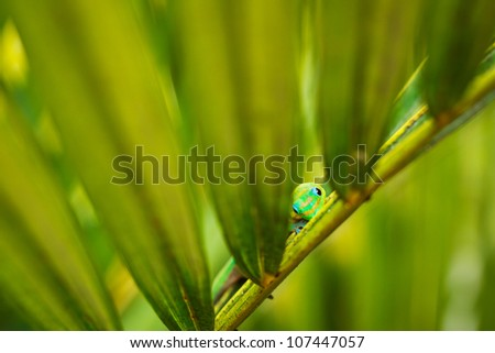 Exotic Green Tropical Lizard Hiding in Lush Fern - stock photo