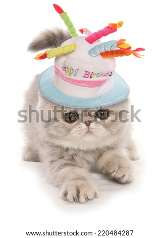 exotic kitten portrait - stock photo