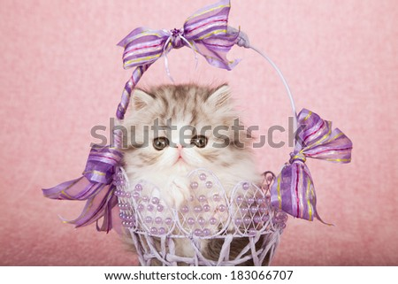 Exotic kitten sitting inside beaded lilac lavender basket with ribbons and bows on pink background - stock photo